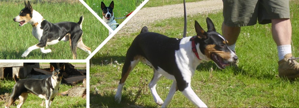 CLAN CLARK DECKER LINE RAT TERRIERS